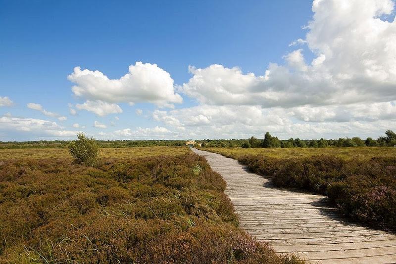 Corlea Trackway, quando o homem caminhava sobre os pântanos